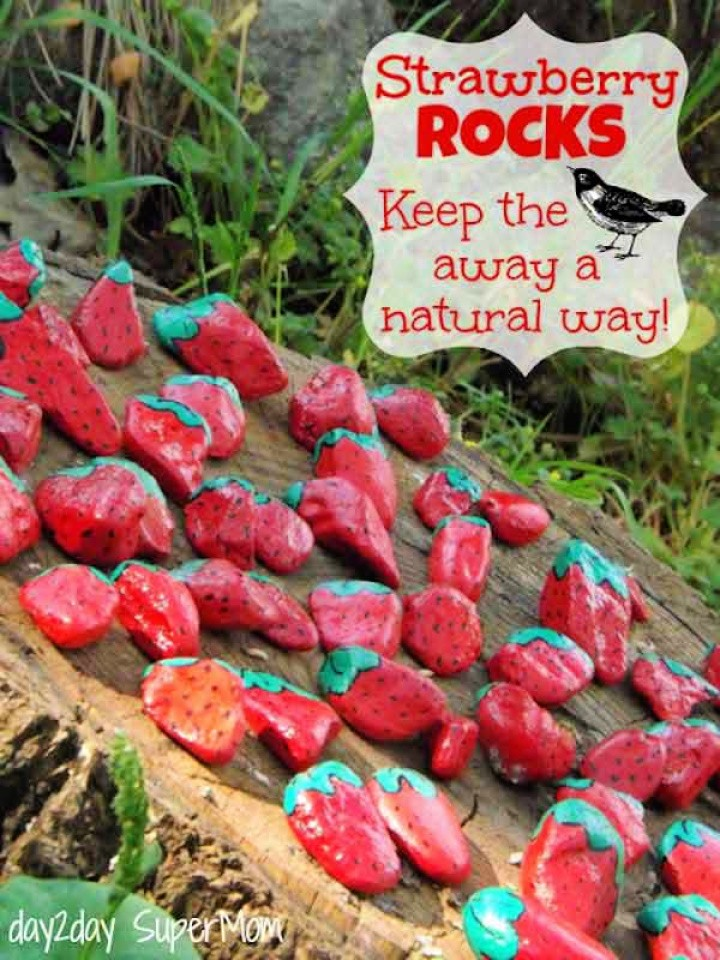 Colorful Strawberry Rocks