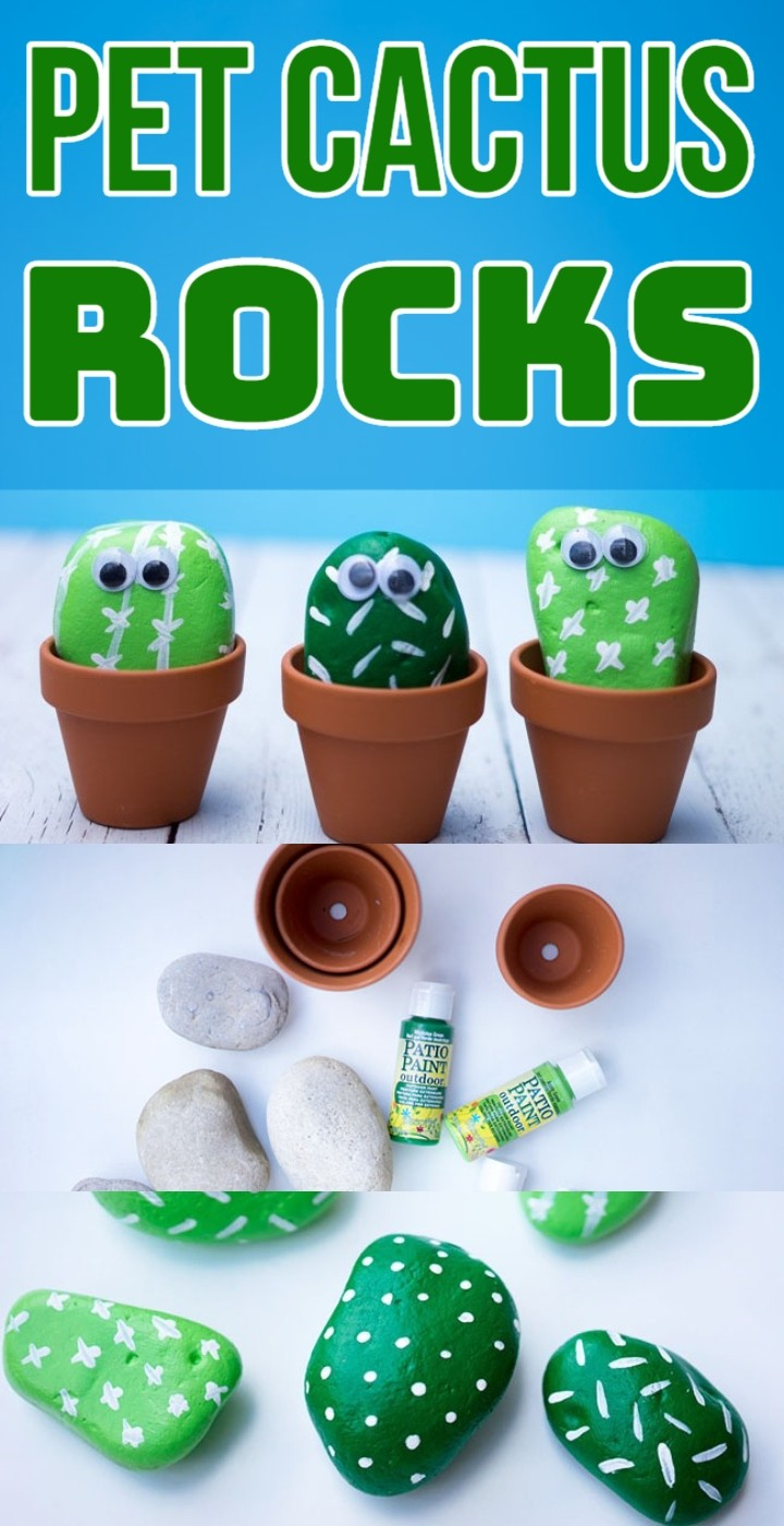 Pet Cactus Rocks