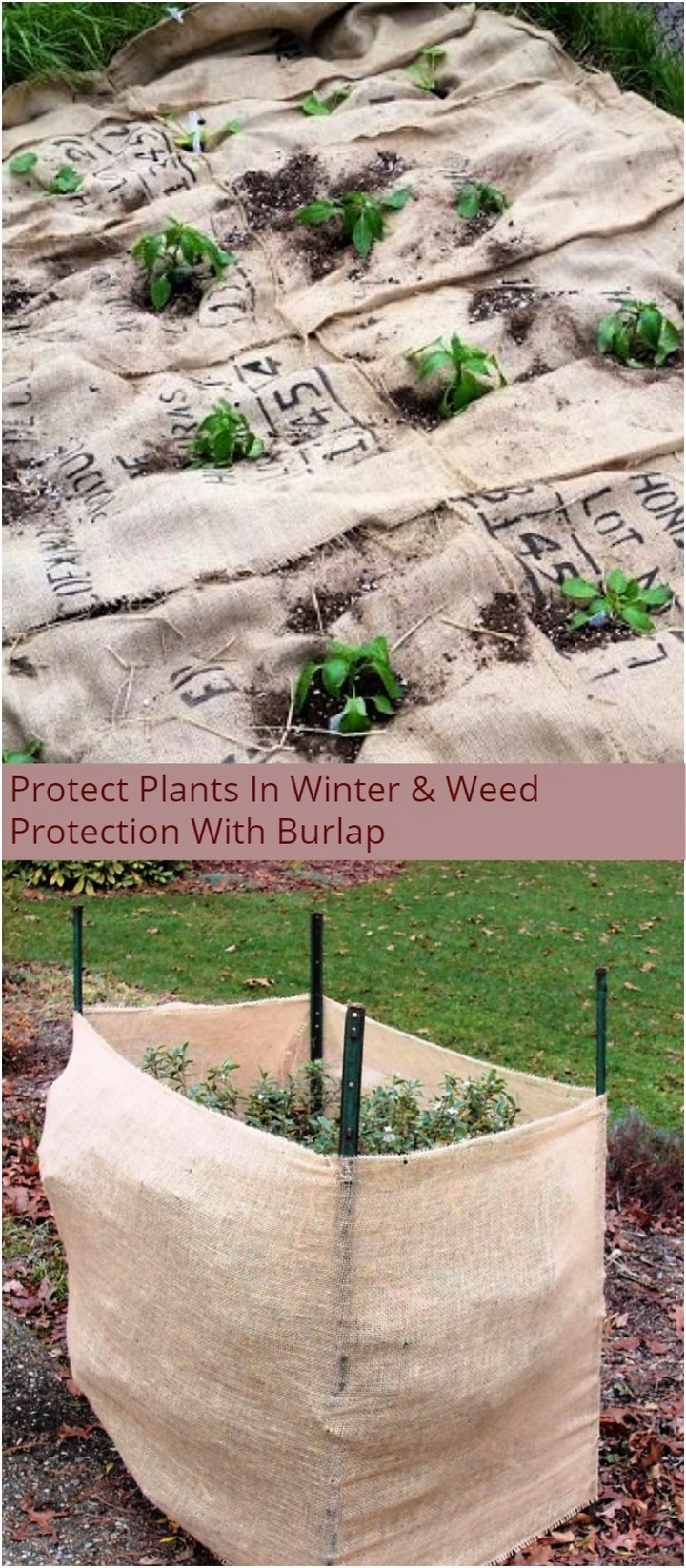 Protect Plants In Winter Weed Protection With Burlap