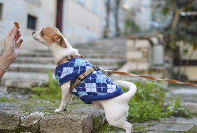 Few Ingredient DIY Dog Treat Recipes